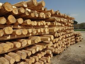 دپو الوار چوب صنوبر کولری کندوان